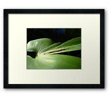 Long Jaw Orb Weaver on Pickerel Weed Framed Print