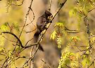 TREE DWELLER  by Sandy Stewart