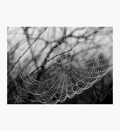 Dew Drops, Bob Marley Photographic Print