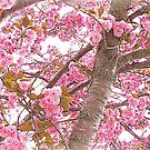 Pink Canopy of Love by Susan Werby