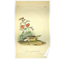 James Audubon Vector Rebuild - The Birds of America - From Drawings Made in the United States and Their Territories V 1-7 1840 - Missouri Meadow Lark Poster