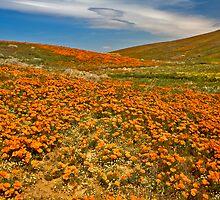 Lancaster Poppy Fields by photosbyflood