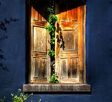 A Window On Tucson by Lois  Bryan