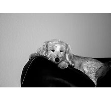 Dexters Chair Photographic Print