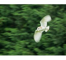 Barn Owl Motion Blur Photographic Print