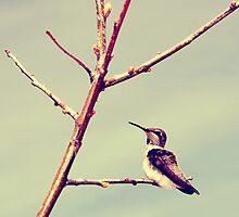 The Proud Humming Bird by Karina Kaiser