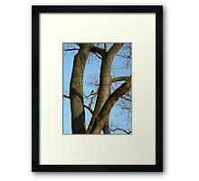 dark crow in the tree Framed Print