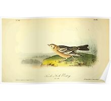 James Audubon Vector Rebuild - The Birds of America - From Drawings Made in the United States and Their Territories V 1-7 1840 - Smith's Lark or Bunting Poster