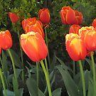 April sunshine by bubblehex08
