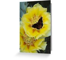 Beautiful Cactus Flower and a Butterfly attached Greeting Card
