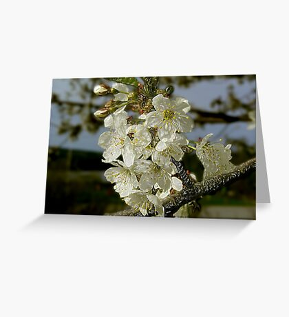 Cherry Blossom Tree Greeting Card