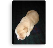 Wendy the Yellow Lab Mix Puppy Napping Canvas Print