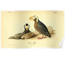 James Audubon Vector Rebuild - The Birds of America - From Drawings Made in the United States and Their Territories V 1-7 1840 - Tufted Puffin Poster