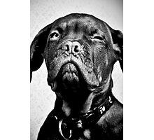 Sumo the dog Photographic Print