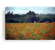 Marigold fields, marshmallow skies ... a farmer and his cow. Canvas Print
