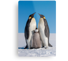 Emperor Penguins and Chick - Snow Hill Island Metal Print