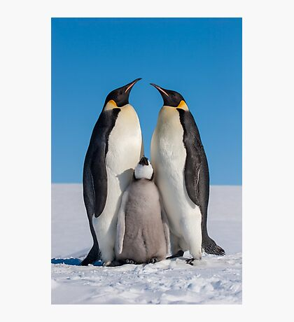 Emperor Penguins and Chick - Snow Hill Island Photographic Print