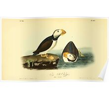 James Audubon Vector Rebuild - The Birds of America - From Drawings Made in the United States and Their Territories V 1-7 1840 - Large Billed Puffin Poster