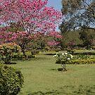 Cubbon Park, Bangaluru by AravindTeki