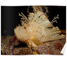 Leaf Scorpionfish (3) Poster