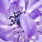 Flora 2010 by rabeeker