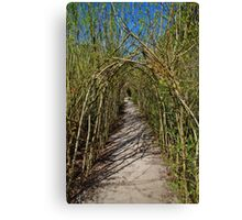 The Willow Walk Canvas Print
