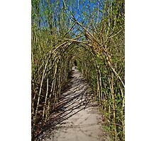 The Willow Walk Photographic Print