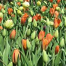 Tulip Patch by Monnie Ryan