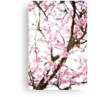 Underneath Pink Blooms Canvas Print
