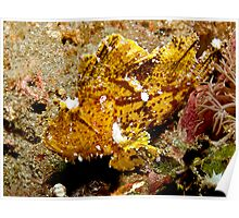 Leaf Scorpionfish (4) Poster