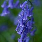 Bluebells by Katariina Jarvinen