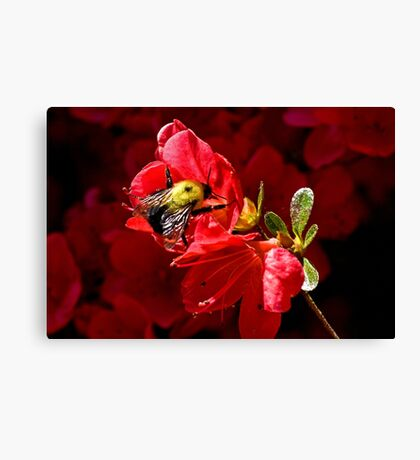 Community Service Canvas Print