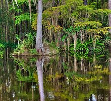 Big Cypress National Preserve by Tomas Abreu