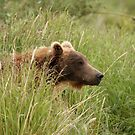Young Brown Bear by Gina Ruttle  (Whalegeek)