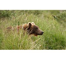 Young Brown Bear Photographic Print