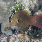 Angry Grouper by Mark Rosenstein