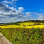 North Downs Way 2 by gollum1985
