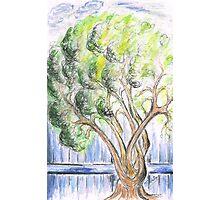 Garden  Tree Photographic Print