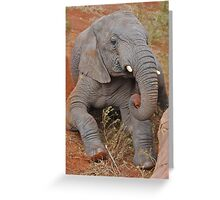 Elephant's Time Out  Greeting Card