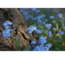 Forget Me... Not Photographic Print