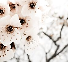 Winter Flowers by Sophie Gonin