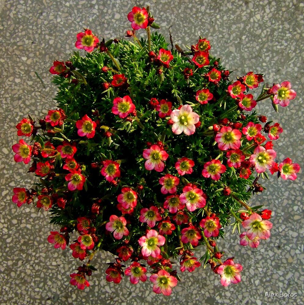 Flower Ball by Alex Boros
