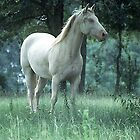 Big White Stallion by WTBird
