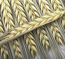 wheat ears cereals by Artur Mroszczyk