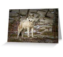 Timber Wolf on Guard Greeting Card