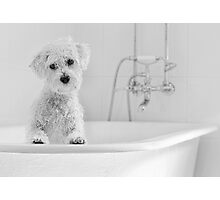 Bath Time.. Photographic Print