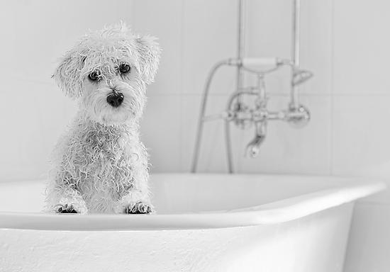 Bath Time.. by Nicole Goggins