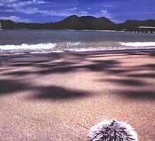White sea urchin on Negril beach by Bob Gaffney