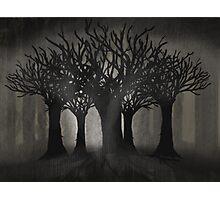 Dark Woods Photographic Print