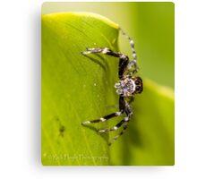 Morning Spider Canvas Print